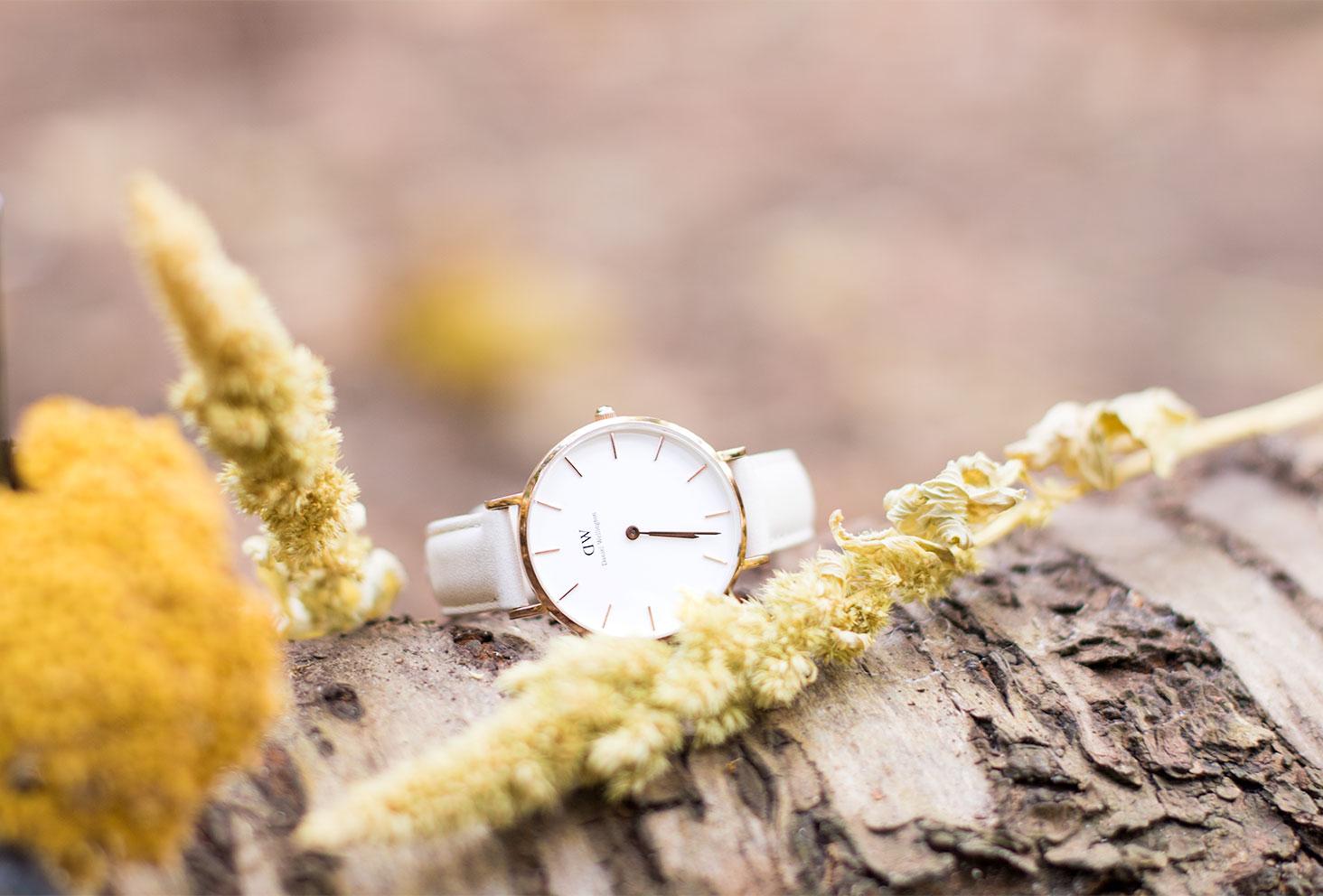 La montre Classic Petite Bondi posé sur un tronc d'arbres dans la forêt automnale au milieu des fleurs séchées