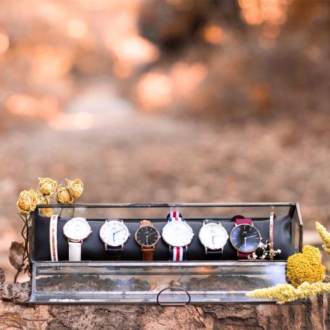 L'ensemble des montres Daniel Wellington dans un rangement en verre sur une souche d'arbre au milieu de la forêt aux couleurs automnales