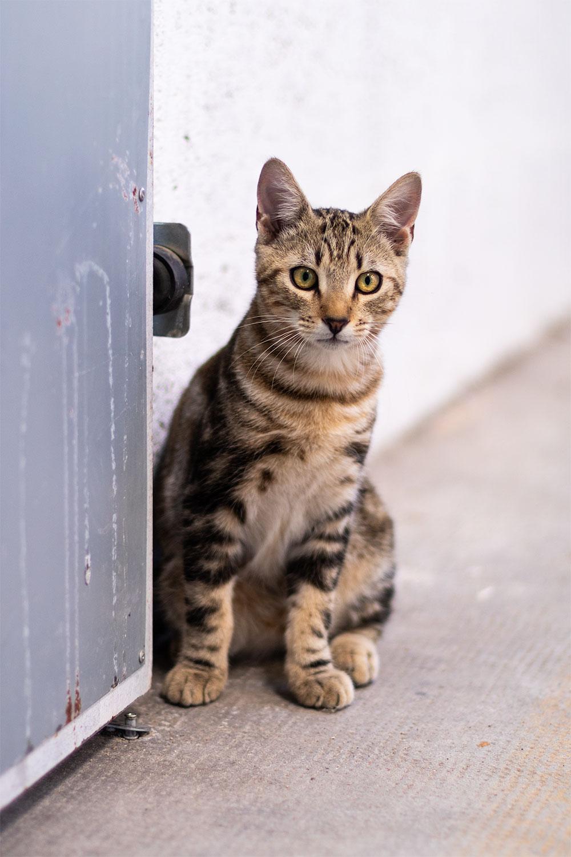 Un chaton dans un bâtiment industriel, le long d'une porte en métal gris